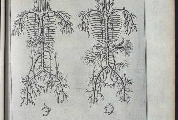 venus-von-minden_fuhrmann_syntagma-anatomicum_web